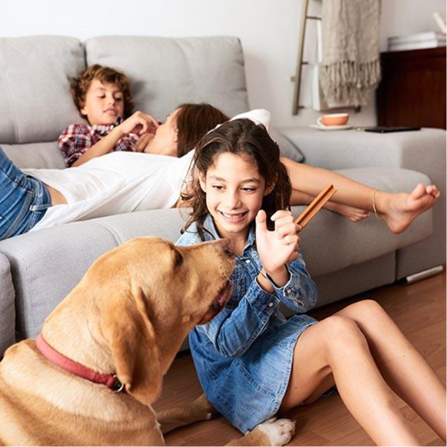Girl and dog playing in living room