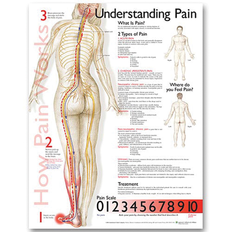 understanding pain chart  meyer physical therapy